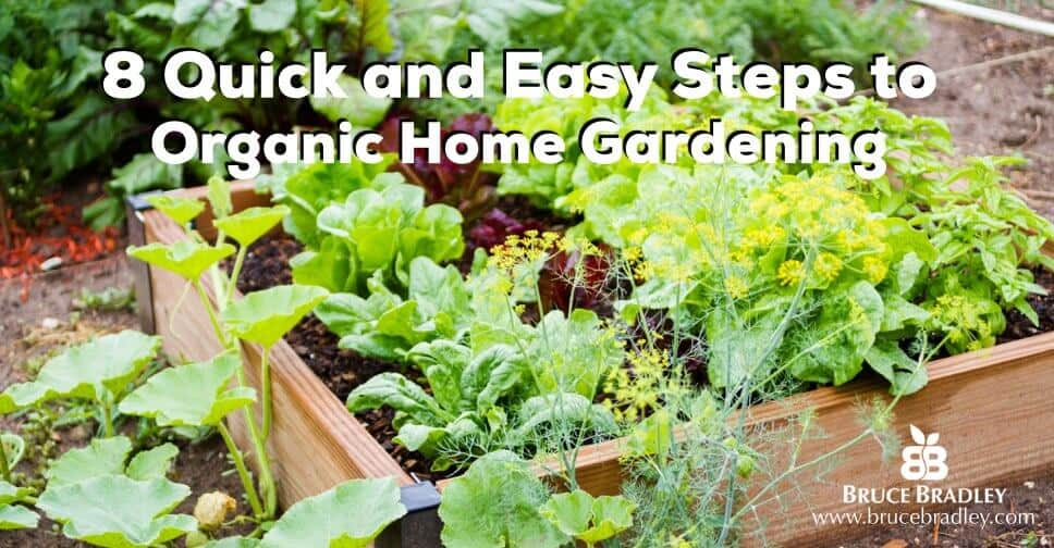 . How To Get Started With a Quick   Easy Organic Garden