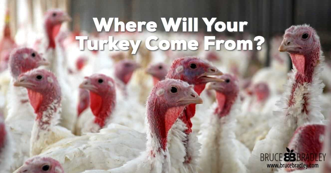 Do you know where your turkey comes from? Learn the dirty truth about the poultry business from a former turkey farmer!